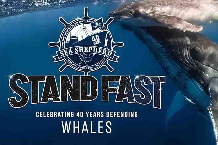 https://static.seashepherdglobal.org/media/filer_public_thumbnails/filer_public/83/4b/834b7ed9-e7ae-46e1-97f9-7e54b4f4d82c/8_40_years_of_whale_defence_760_x_505.jpg__760x505_q85_crop_subsampling-2.jpg